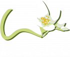 Syringa Bend